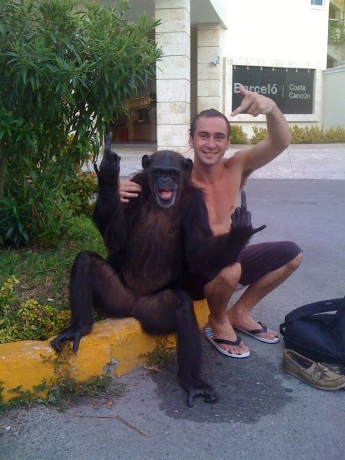 Funny monkey and his best friend