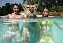 Lucky lion with two girls in the pool