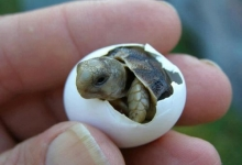 Sweet small turtle
