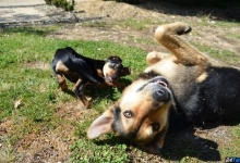 Hey you.. ! (crazy dogs and their happy day)