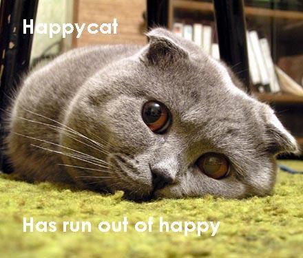 http://24yes.com/gag/Sweet cat