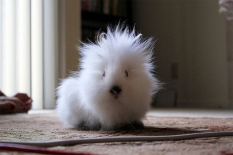 http://24yes.com/gag/Do you know which is this cute animal ?