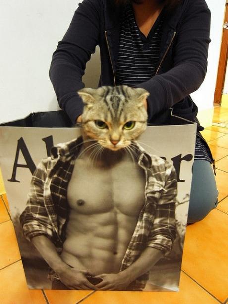 http://24yes.com/gag/Built-up funny cat