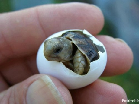 http://24yes.com/gag/Sweet small turtle
