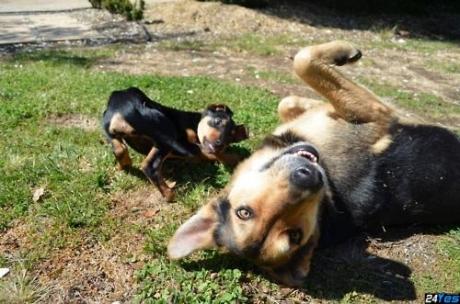 http://24yes.com/gag/Hey you.. ! (crazy dogs and their happy day)